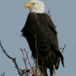 Bird Is The Word: Birdwatching At ACLT